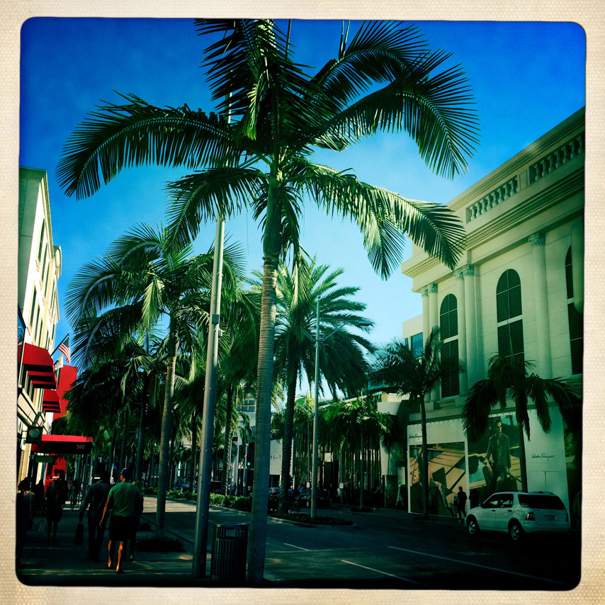 rodeo-palm-trees
