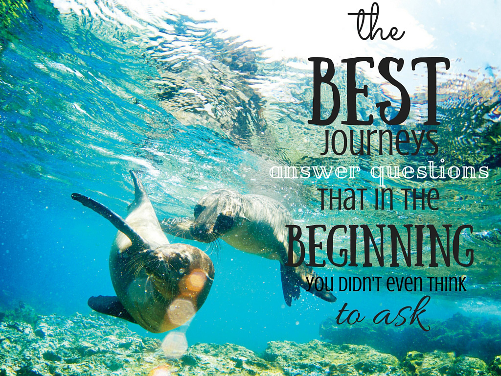 Travel Quote Galapagos Islands seals