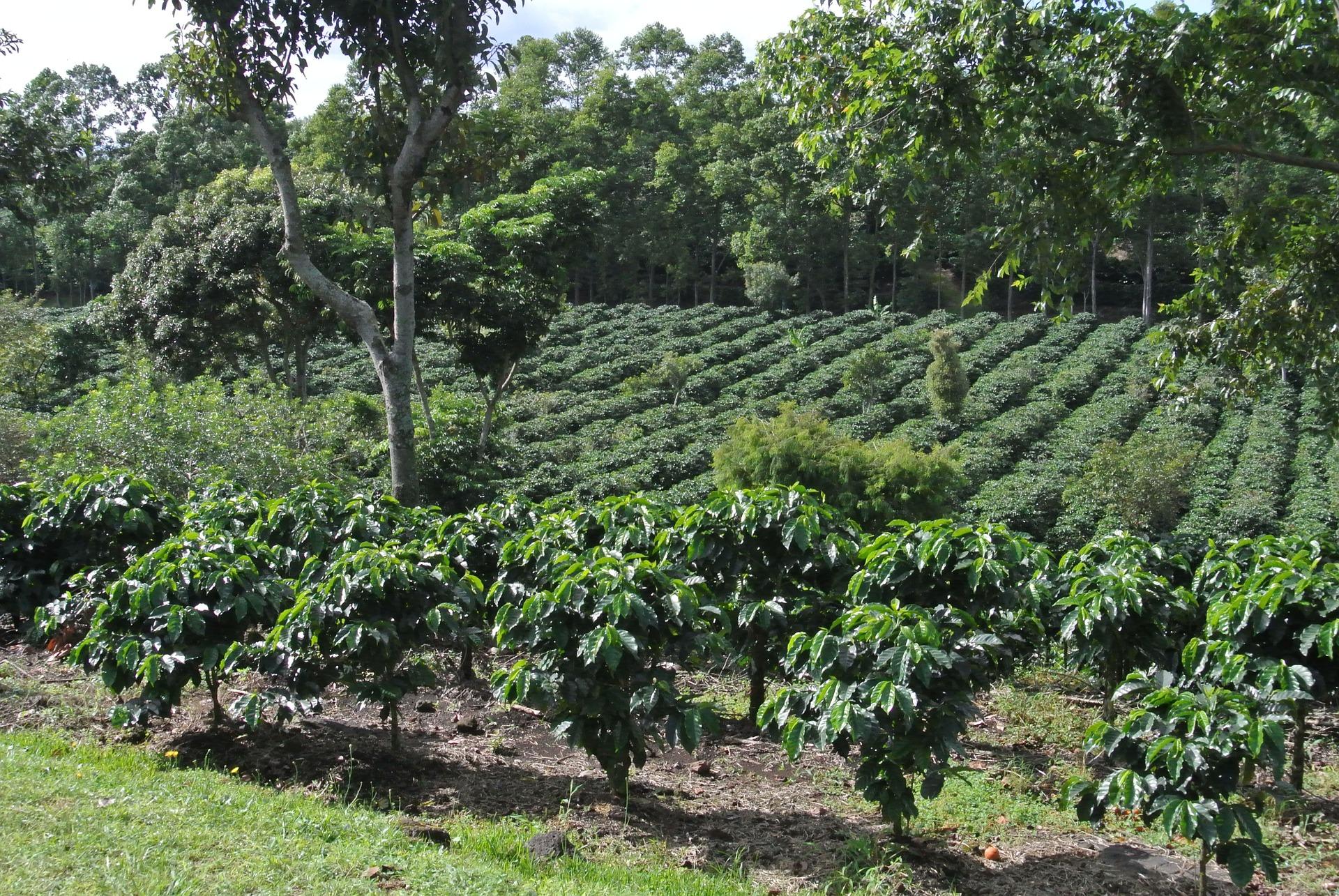 coffee-642773_1920